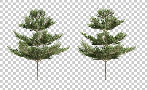 Rappresentazione 3d degli alberi di terminalia ivorensis