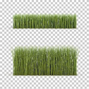 Rappresentazione 3d dell'erba di equiseto