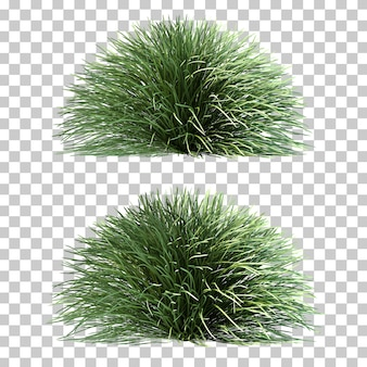 Rappresentazione 3d dell'erba di mondo