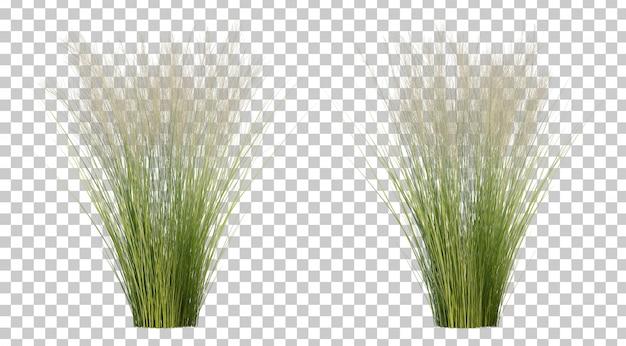 Rappresentazione 3d dell'erba di piuma messicana