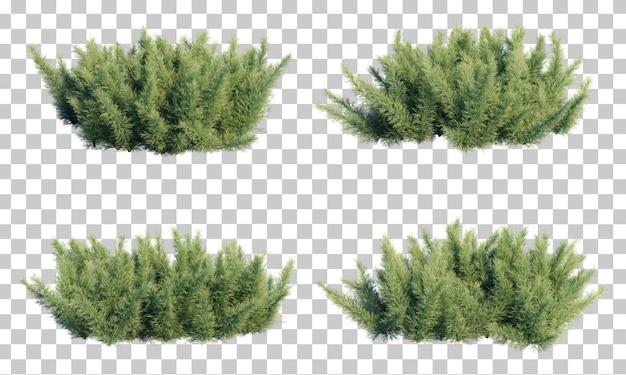 Rappresentazione 3d della felce di asparagi