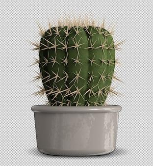 Realistische 3d render van geïsoleerde cactus