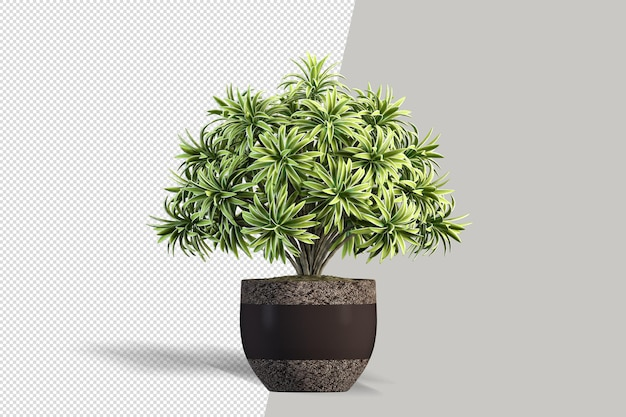 Render van geïsoleerde plant isometrische vooraanzicht transparante muur