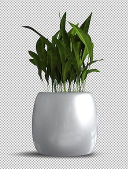 Render van geïsoleerde plant met isometrisch aanzicht