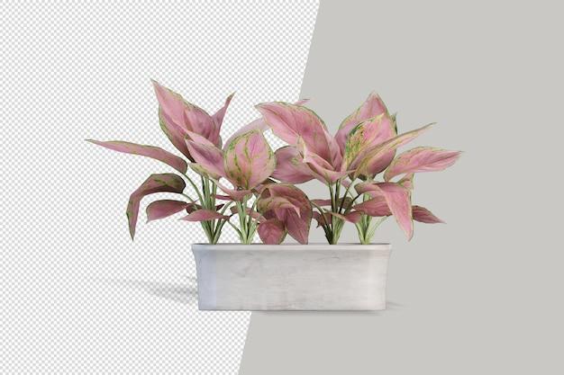 Render van geïsoleerde plant