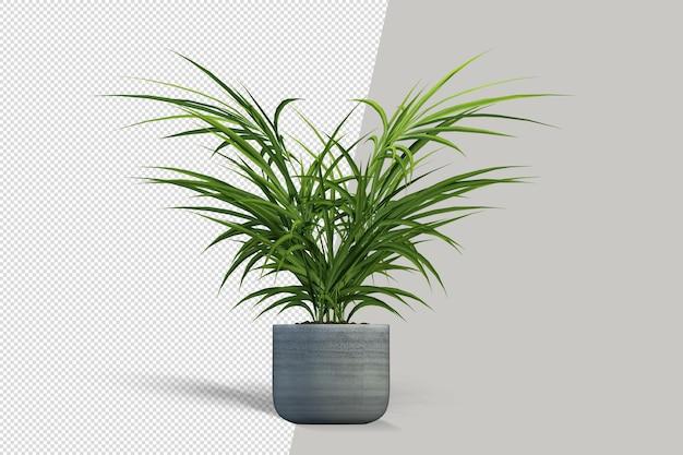 Renderen van geïsoleerde plant in pot