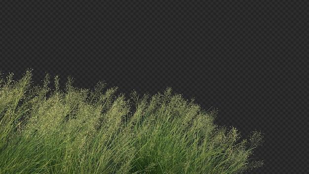 Rendering 3d di erba di riso indiana in primo piano