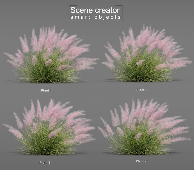 Rendering 3d di pink flamingo muhly grass