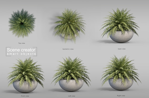 Representación 3d del árbol de helecho en maceta creador de escena
