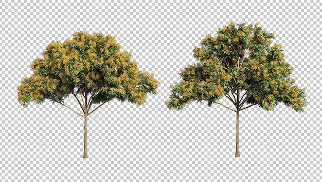Representación 3d de los árboles de delonix regia