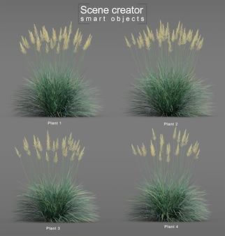 Representación 3d de boulder blue fescue grass