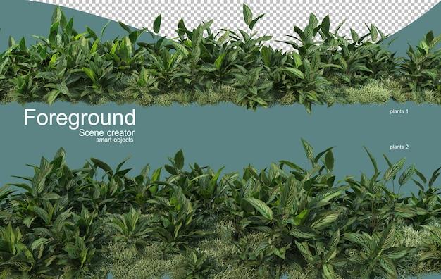 Representación 3d del diseño de primer plano de las plantas