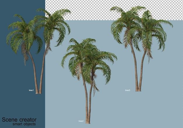 Representación 3d de hermosos árboles en varios ángulos aislados