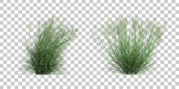 Representación 3d de la hierba de arroz indio