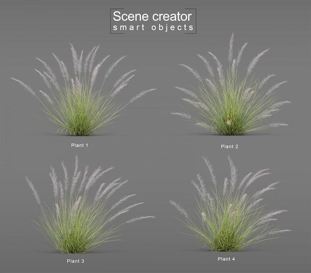 Representación 3d de pink flamingo muhly grass