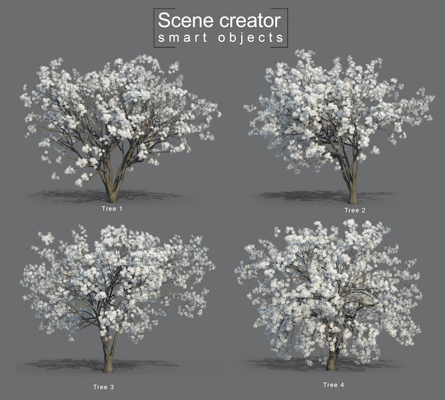 Representación 3d de star magnolia