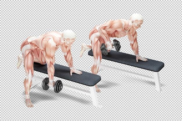 Righe di manubri esercitano illustrazione anatomica