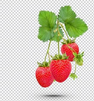 Rijpe aardbeien met geïsoleerde bladeren premium psd