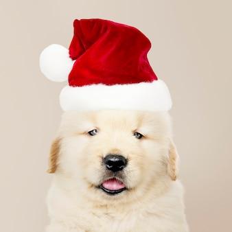Ritratto di un cucciolo di golden retriever che indossa un cappello di babbo natale