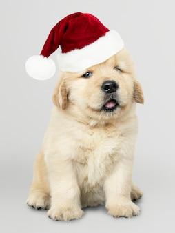Ritratto di un simpatico cucciolo di golden retriever che indossa un cappello di babbo natale