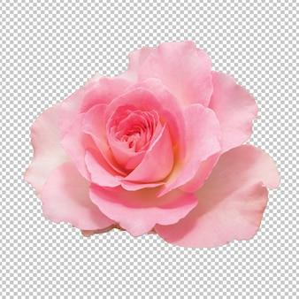 Rosa rosa flores en transparente