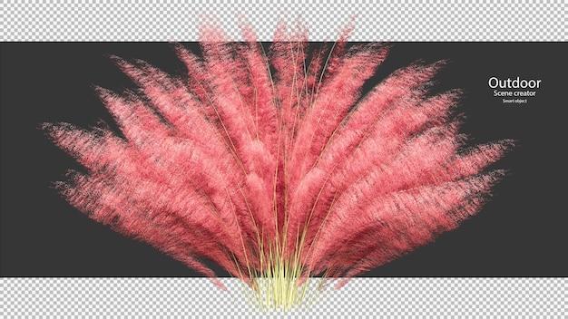 Roze pampasgras uitknippad
