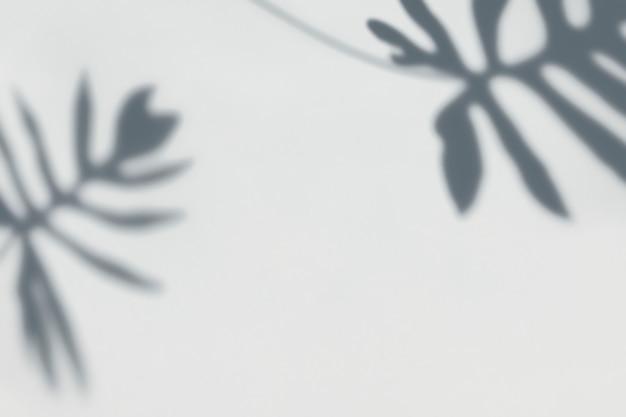 Schaduw van bladeren op een muur