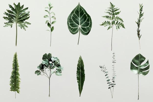 Schaduw van palmbladeren op een muur