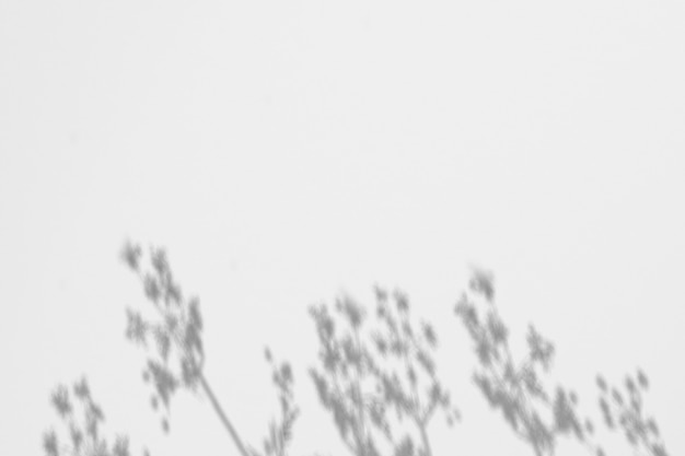 Sombra de hojas en una pared.