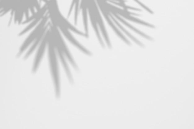 Sombras de hojas de palmera tropical en una pared blanca