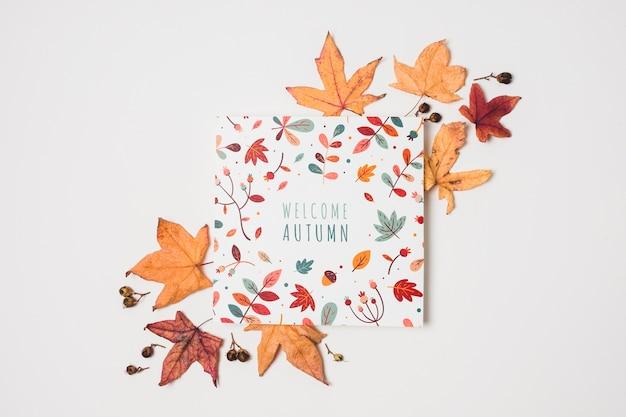 Sopra le foglie di autunno di vista su fondo bianco