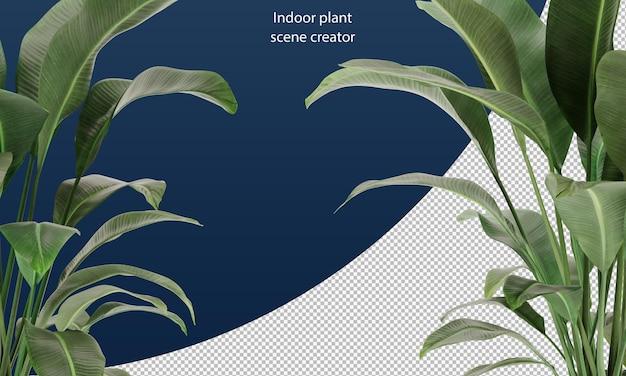 Strelitzia nicolai laat plantenbladeren voor scènedecoratie
