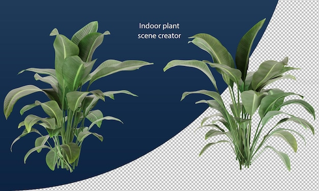 Strelitzia nicolai plant geïsoleerde plant geïsoleerde plant met op pot