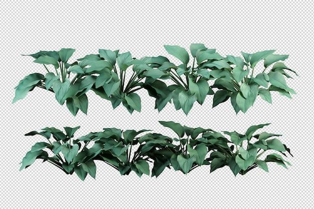 Tropische bomen en bloemen in 3d-rendering geïsoleerd