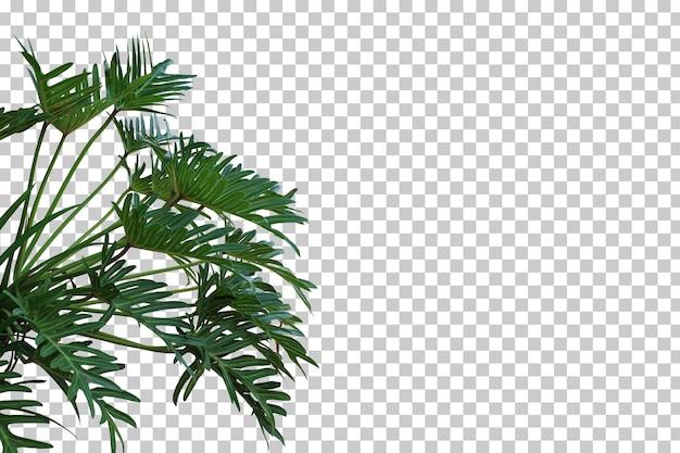 Tropische boom bladeren en tak voorgrond geïsoleerd