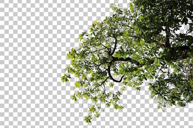 Tropische boombladeren en takvoorgrond
