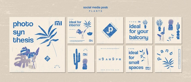 Vari tipi di piante da interno post social media