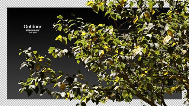Variëteit bomen uitknippad boomtak boomweergave
