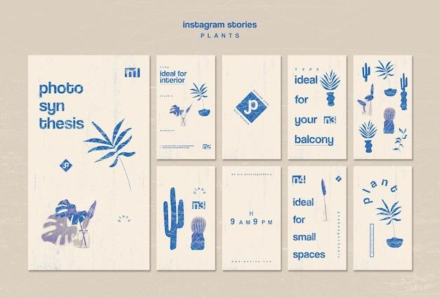 Varios tipos de historias de instagram de plantas de interior
