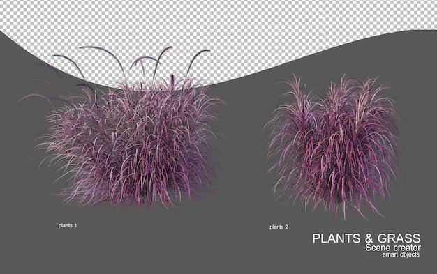 Veel soorten grassen