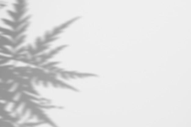 Verano de sombras hojas de helecho en una pared blanca