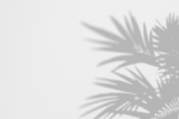 Verano de sombras hojas de palmera en una pared blanca.