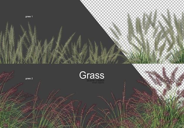 Verscheidenheid aan bomen en gras
