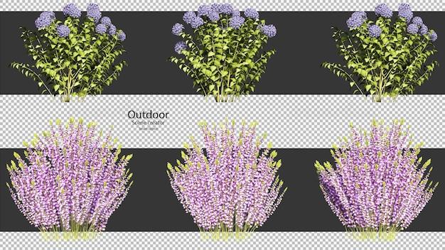 Verscheidenheid soorten bloemen uitknippad bloem geïsoleerd
