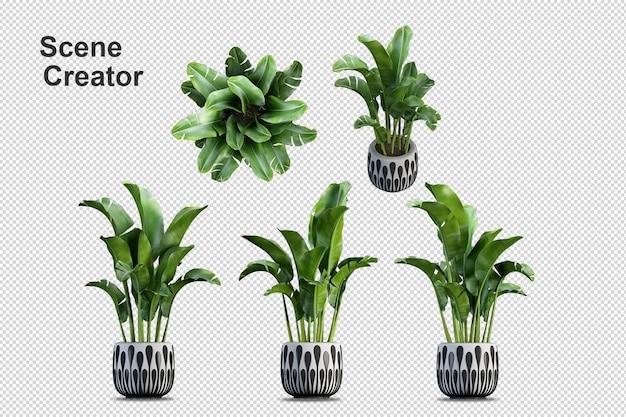 Verschillende soorten bananenboom 3d-rendering