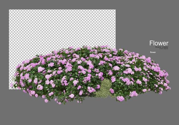 Verschillende soorten bloemen