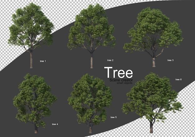 Verschillende soorten bomen geïsoleerd weergeven