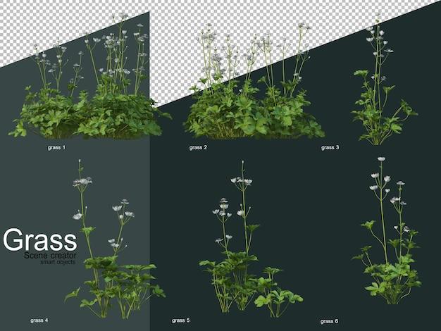 Verschillende soorten gras 3d-rendering
