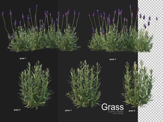 Verschillende soorten grasweergave