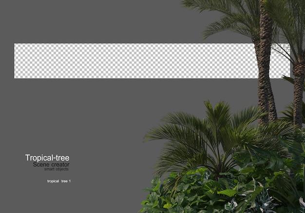 Verschillende soorten tropische bomen